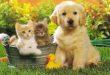 cani-e-gatti