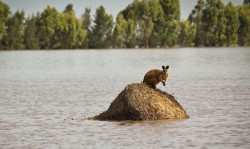 australia alluvioni