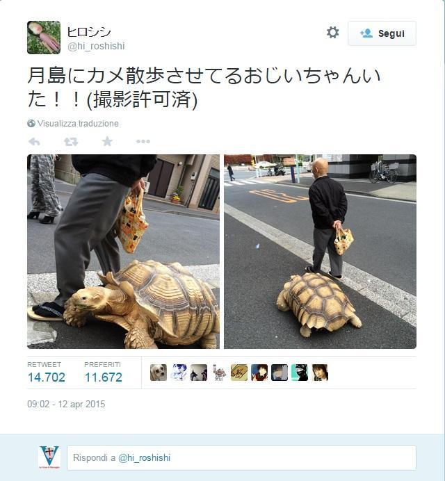 tartaruga a passeggio a tokio