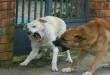 cane aggressione