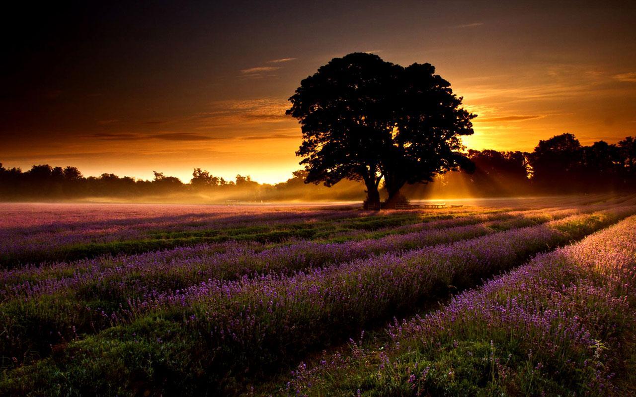 sole levante