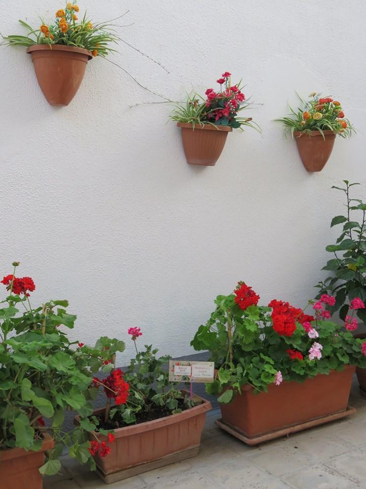 Balconi Fioriti  Allestimento n° 2