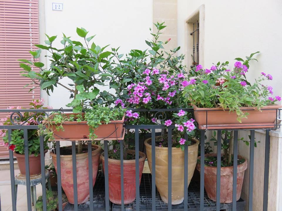 Balconi Fioriti  Allestimento n° 10