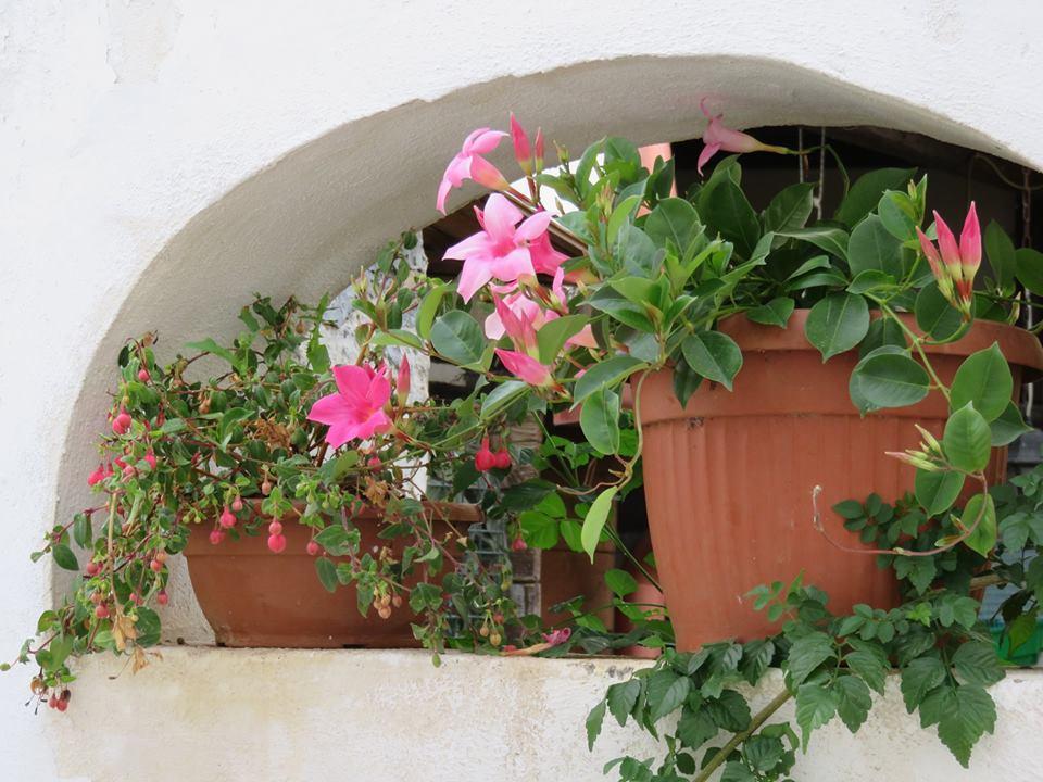 Balconi Fioriti  Allestimento n° 4