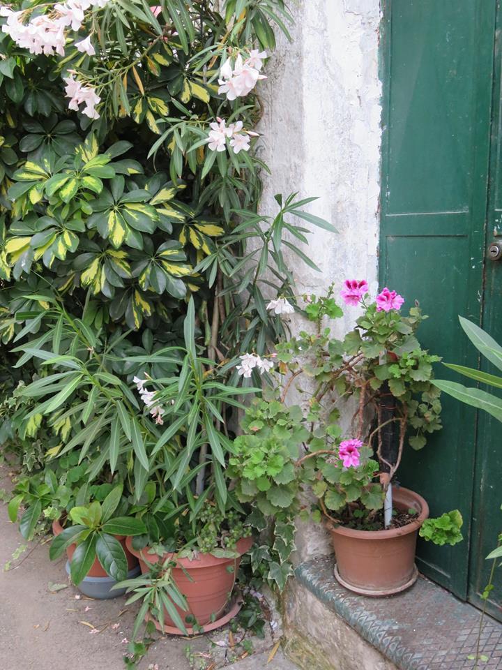Balconi Fioriti  Allestimento n° 6