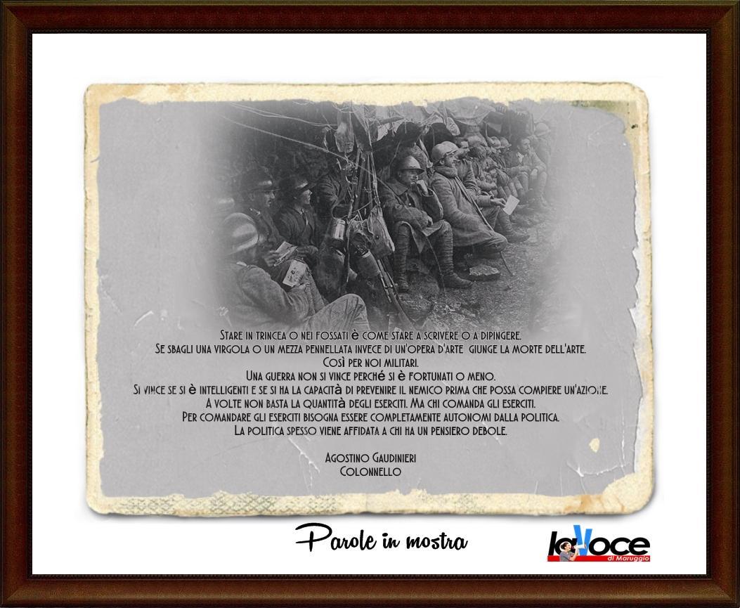 tricea 2