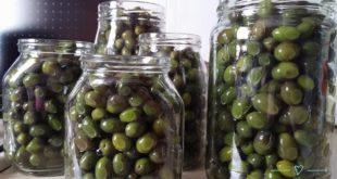 olive-simy