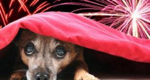botti-capodanno-cane
