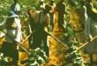 contadini-campi-900x445